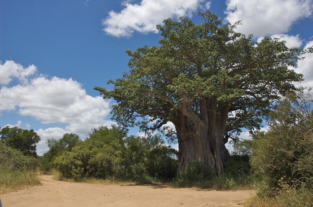 Baobab Bénin