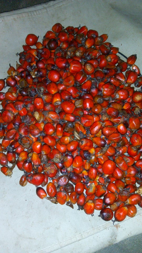 Noix de Palme – Sauce Dékoun ou Sauce Graine – ©Visiter le Bénin