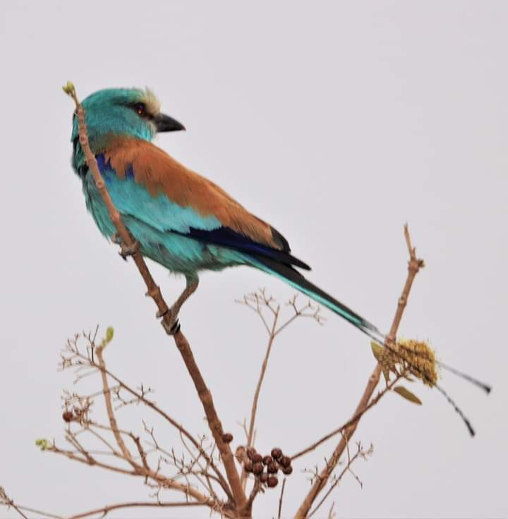 Un Oiseau du Parc de la Pendjari pris par Sylvie Assiba YEROPA